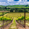 Livermore Valley Vines