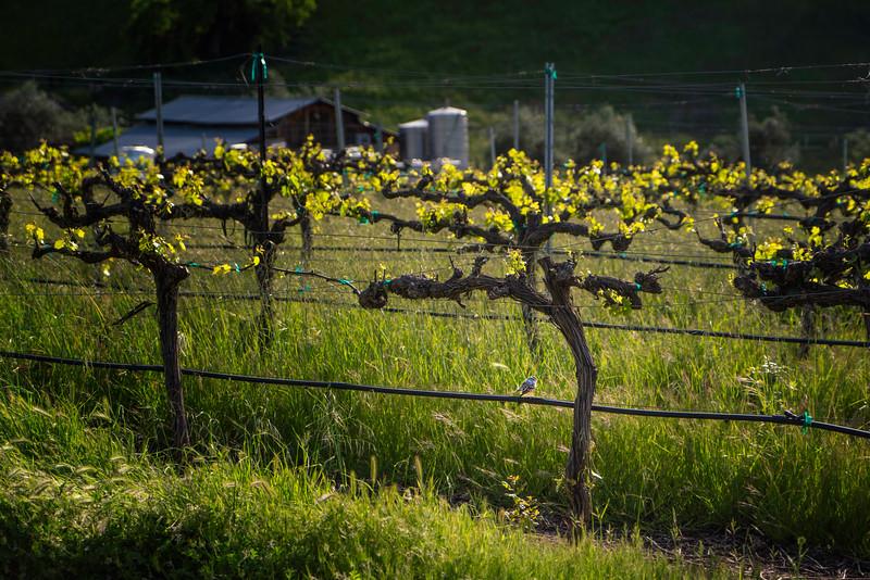 Vines and Bird at Bent Creek