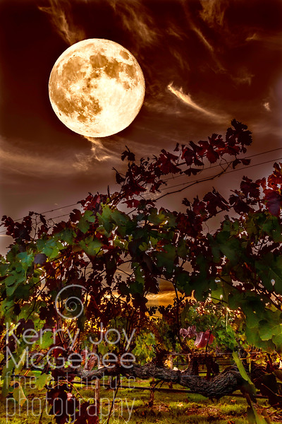 Vineyard Super Moon