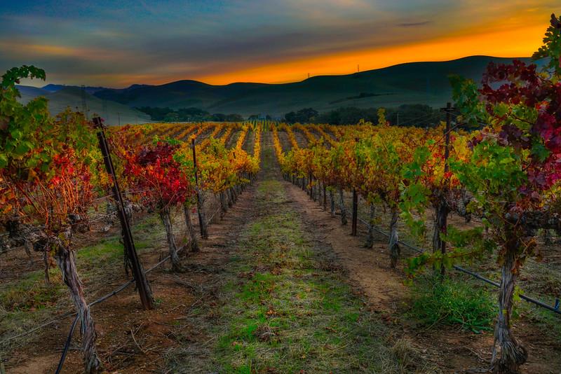 Tenuta Vineyard Sunset