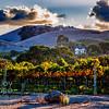 Victorian Vineyard