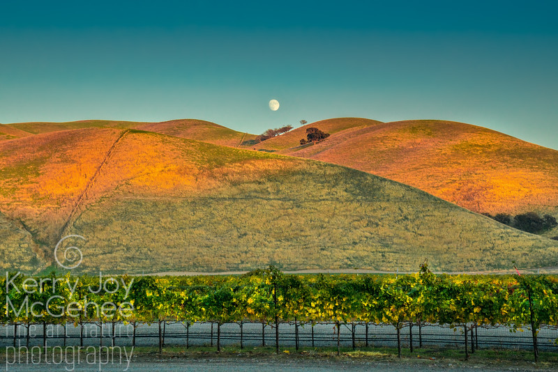 Full Moonrise Over Wente