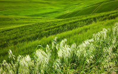 Pienza area, Italy