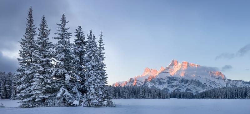 Winter Pine - Banff National Park, Alberta