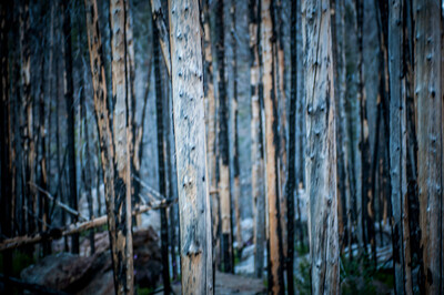 Pack Trip MT 2012-2517