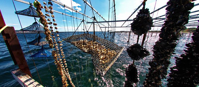 Thau Lagoon, Shellfish Farm