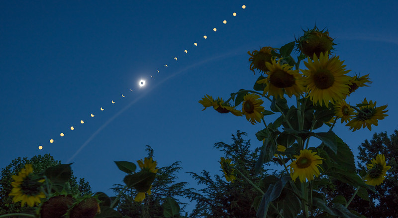 Total Eclipse of the Sunflower