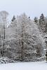 Majestic Snowy Tree