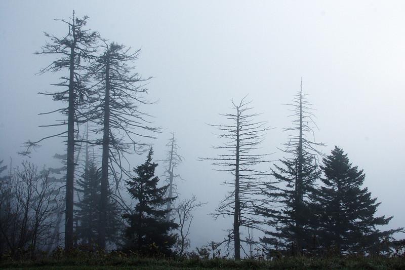 Morning fog on Clingman's Dome. Smoky Mt NP, NC.