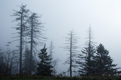 Morning fog on Clingman's Dome. Smoky Mt NP, NC.