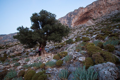 Cath giving the Big olive tree a hug for luck, below the Grand Grotta
