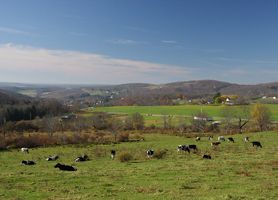 Sullivan County NY Dairy Farm Country.