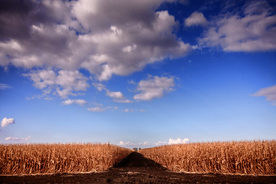 306/365 Harvest - © Simpson Brothers Photography