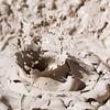 Mud Volcano Study III - Yellowstone NP, WY