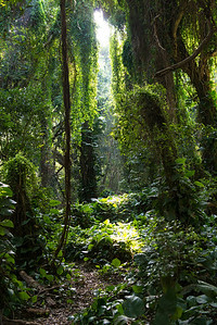 Light from Heaven.  A shaft of light drops through to the jungle floor.
