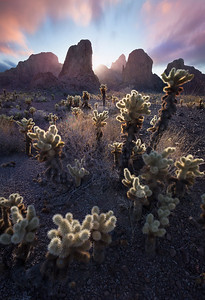The King - Kofa Wildlife Refuge, Arizona