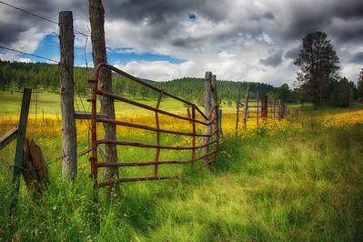 Mountain Meadow II