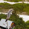 Bird flying over a Bahama island