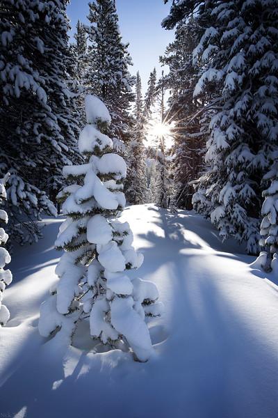 Fresh Blanket - Banff National Park, Alberta