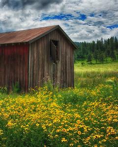 Mountain Meadow III