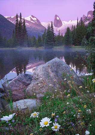 Canadian Gold - Bugaboo Provincial Park, British Columbia