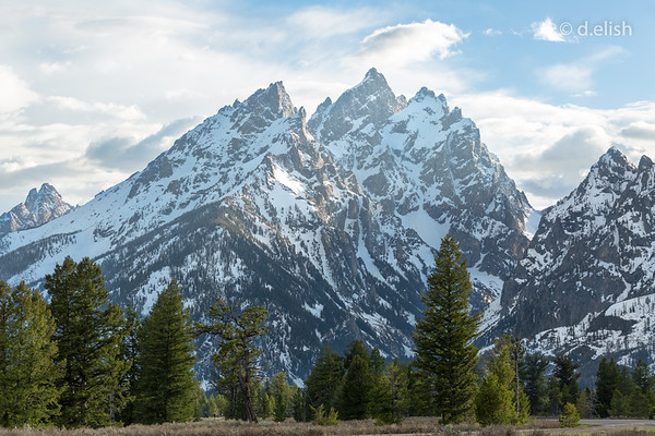 Sharp Peaks with Pine Foreground