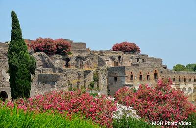 Pompeii Blooms