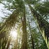 Overgrown - Seymour Arm, British Columbia