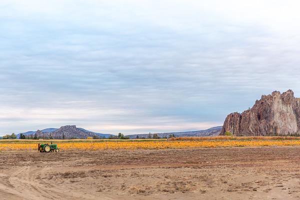 Pumpkin Patch Horizon