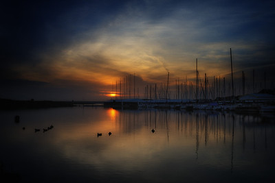 Marina Morning