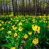Spring Sprouts - Pincher Creek, Alberta