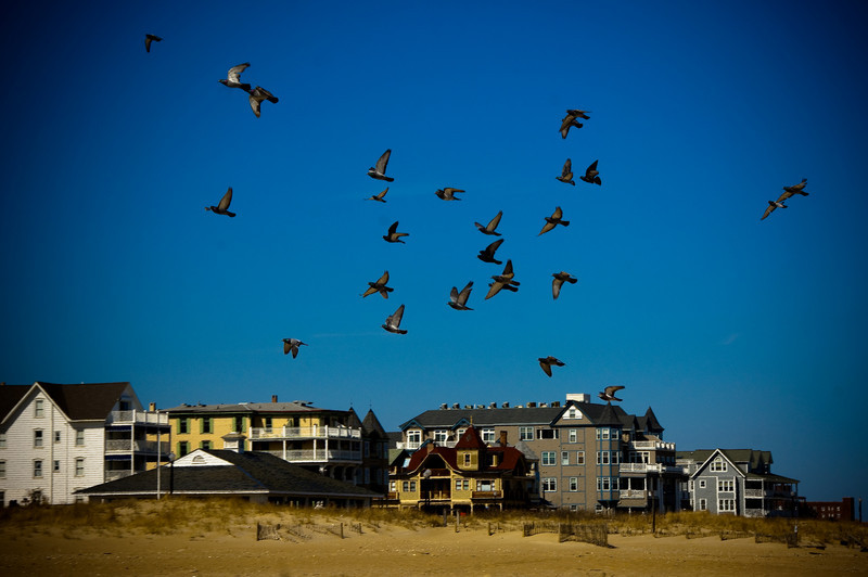 Birds flying into the bright blue sky above a beach lined with beach condominiums over looking the ocean by Alex Kaplan, photographer http://www.alexkaplanphoto.com