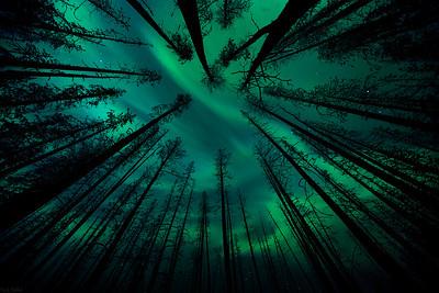Enchanted Forest - Kananaskis, Alberta