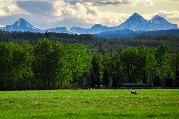The Hunt - Bragg Creek, Alberta