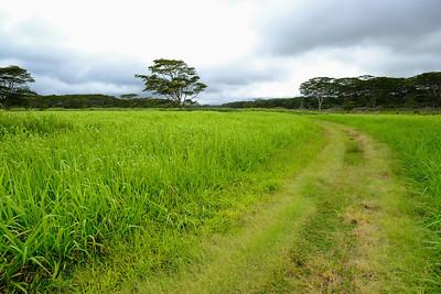 Gorgeous Kauai Hawaii