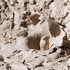 Mud Volcano Study II - Yellowstone NP, WY