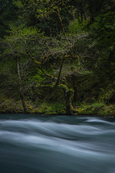 Little White Salmon River