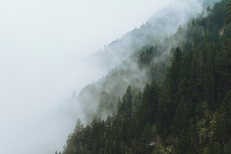 Green pine forest under the fog in Olympus National Park, Greece