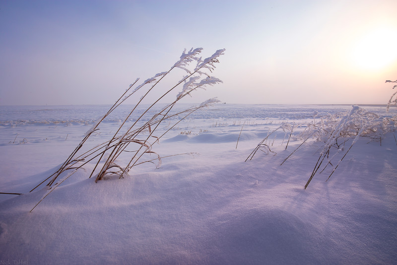 Arctic Dawn - Mossleigh, Alberta