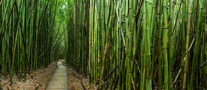 The green room - Pipiwai Trail, Maui, HI
