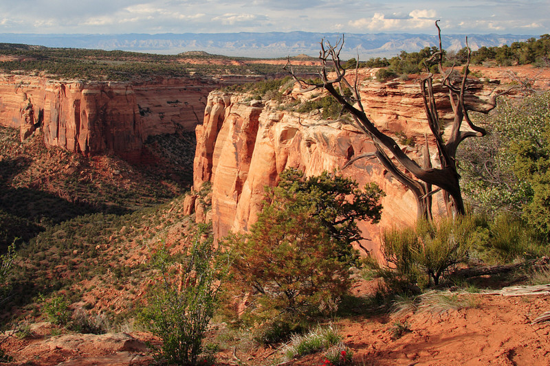 Colorado National Monument. Located outside Grand Junction, CO