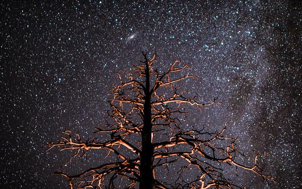 Backlit Tree near Lake Tahoe, Nevada