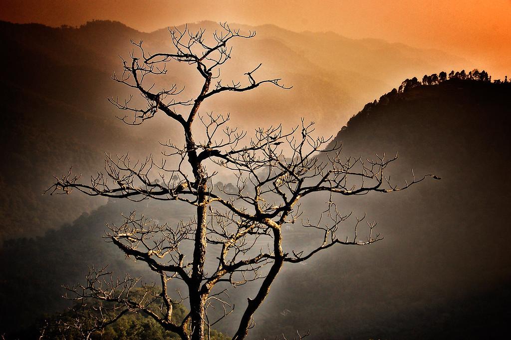Photograph taken in Jim Corbett National Park