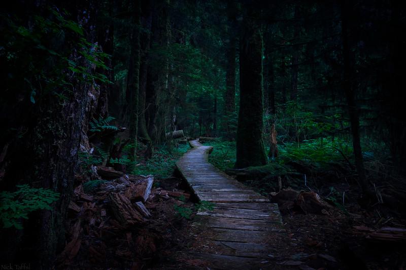 Deep in the Jungle - Carmanah Walbran, B.C.