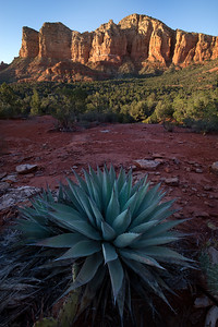 Agave - Sedona, Arizona