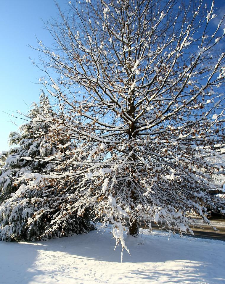 Winter Snow Scene, Glenolden, Pennsylvania.