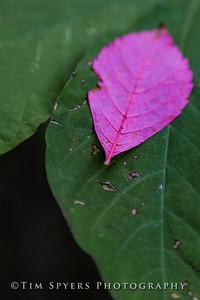 Bee_Tree_Walk-280-58