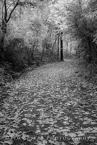 Bee_Tree_Walk-280-72