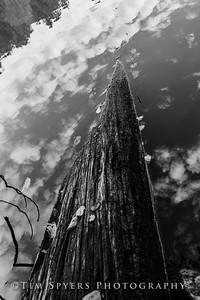 Bee_Tree_Walk-280-49