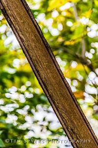Bee_Tree_Walk-280-55